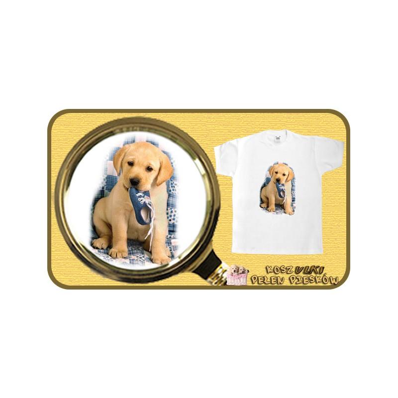 Koszulka chłopięca z psem LABRADOR Z BUTEM